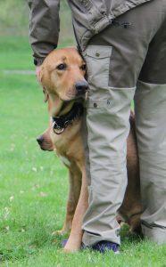 Guthund1