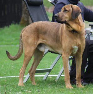 Guthund2